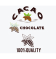 Cacao beans fith leaves vector