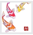 Japanese watercolor carps koi swimming vector