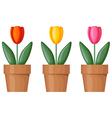 Pot tulips vector