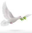 Fly dove vector