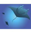 Three sea stingrays vector