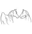 Pair of horses vector