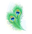 Peacock watercolor style vector