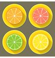 Citrus fruit icons set vector