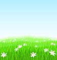 Green grass flower field vector