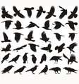 Bird carrion crow vector