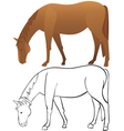 Horse outline and color vector