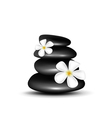 Spa stones with white flowers vector