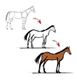Stages of drawing horse sketch for your design vector