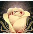 Rose flower vector