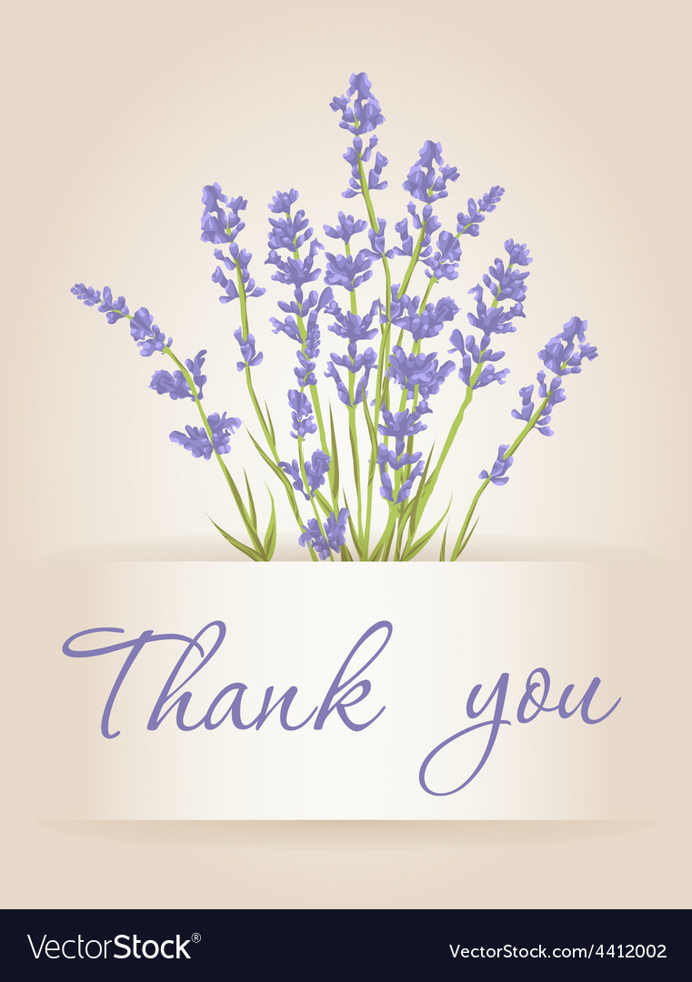 Thank you card with lavender vector | Price: 1 Credit (USD $1)