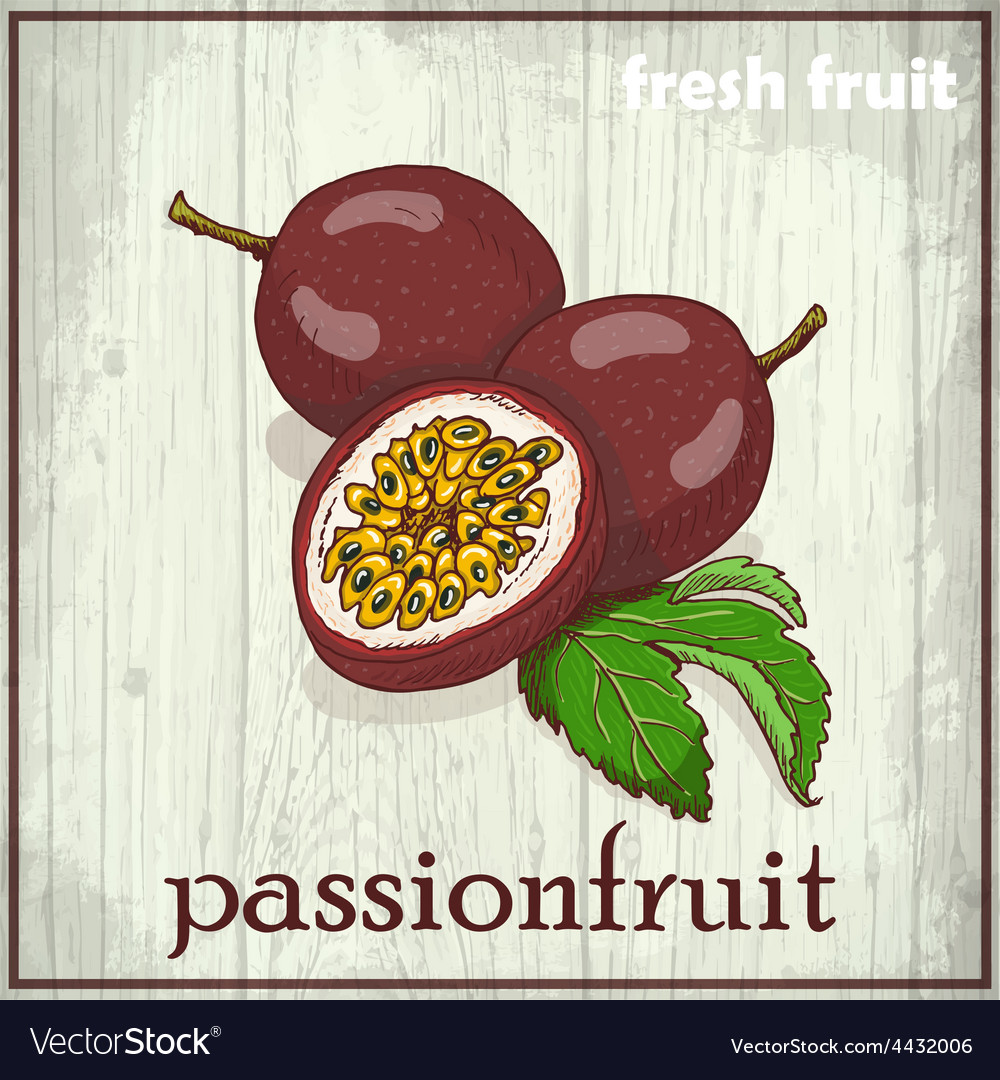 Hand drawing of passionfruit fresh fruit sketch vector | Price: 1 Credit (USD $1)