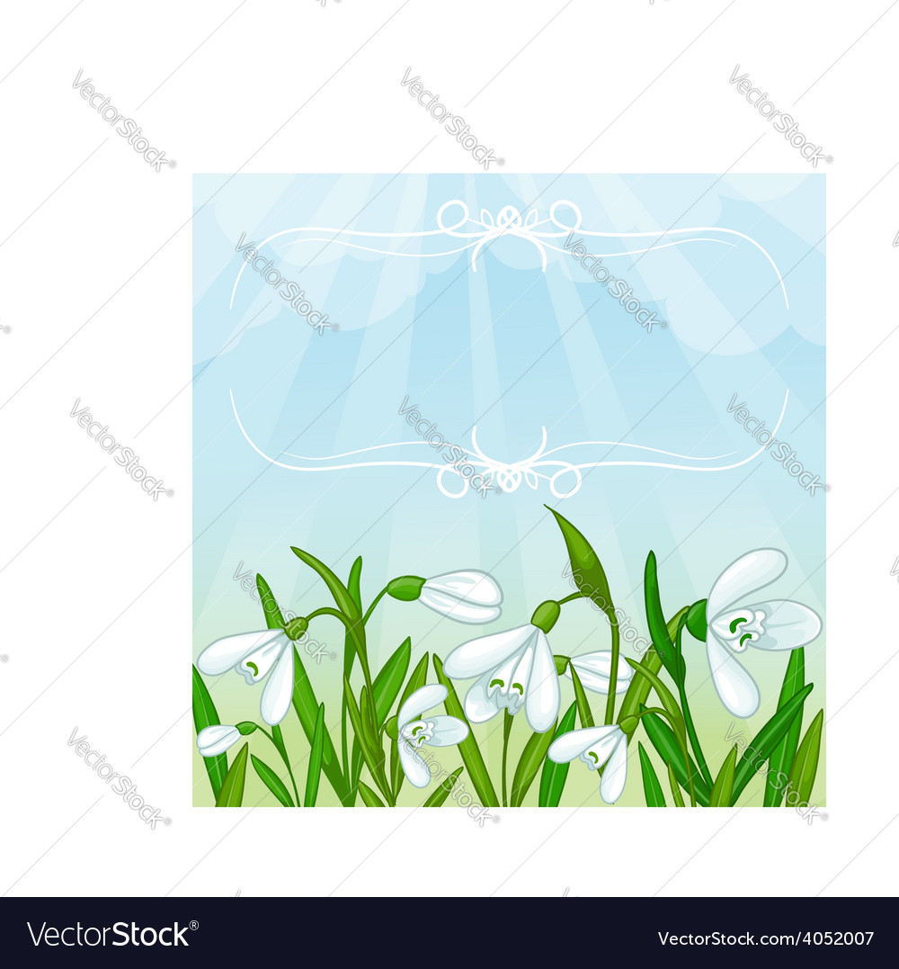 Floral background with white snowdrops vector | Price: 1 Credit (USD $1)