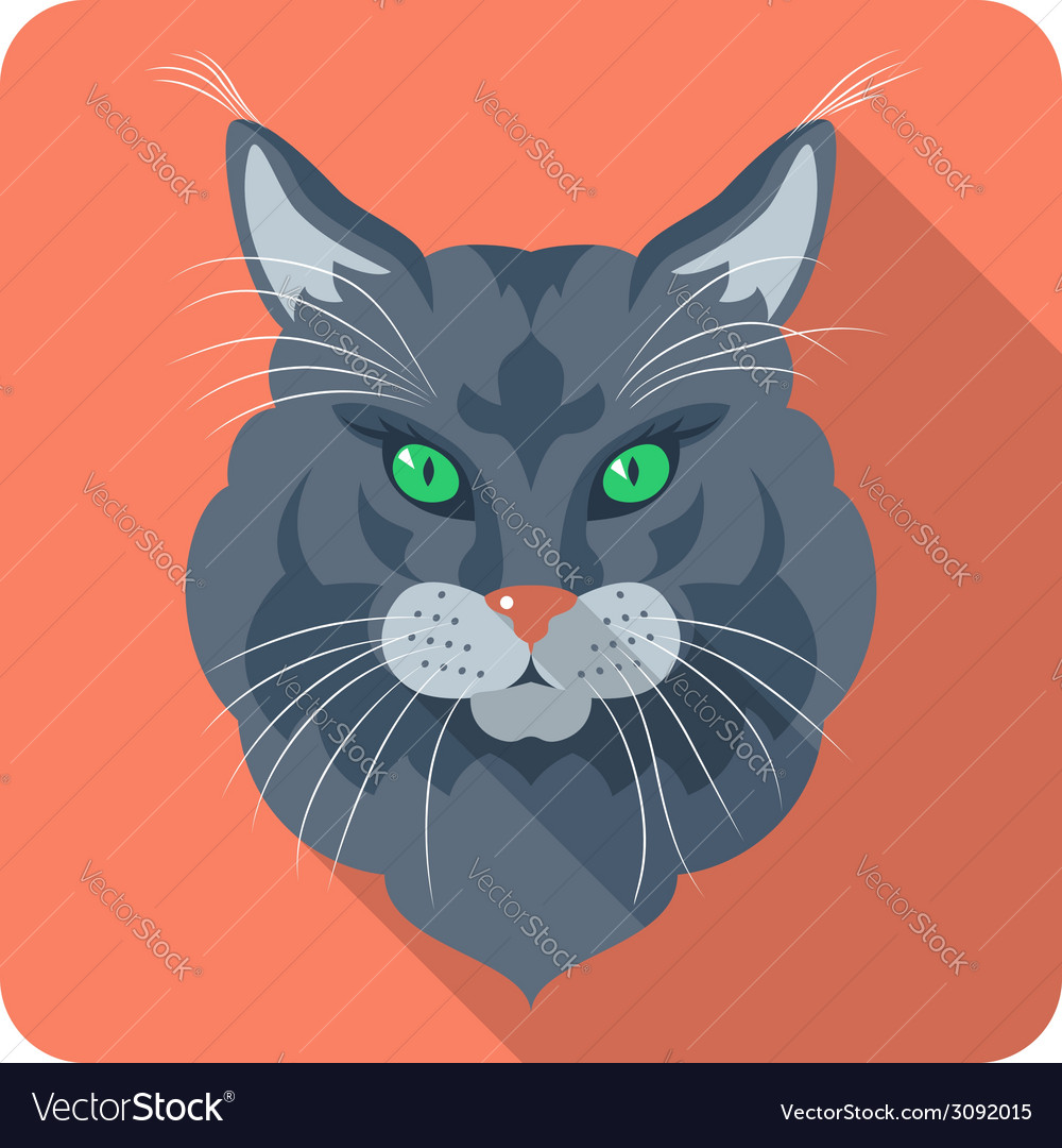 Cat maine coon american longhair icon flat vector | Price: 1 Credit (USD $1)