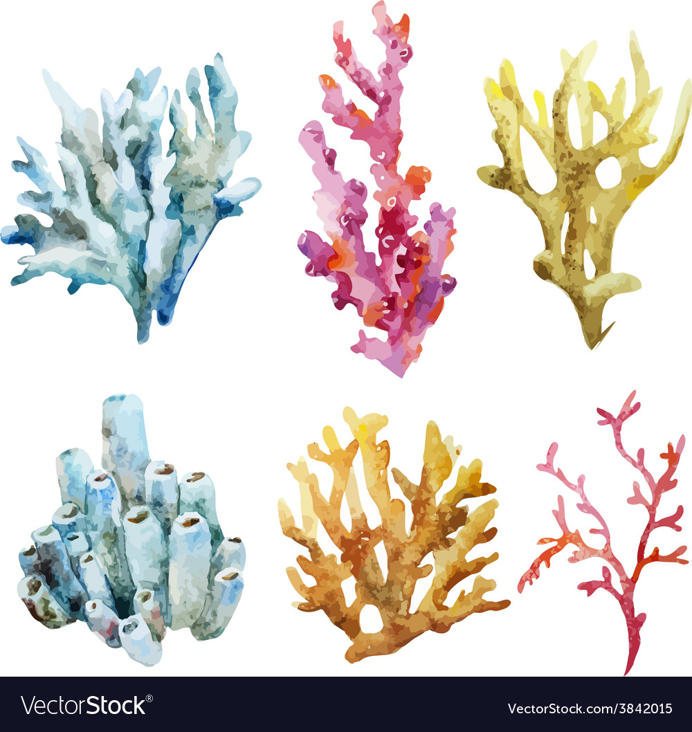 Corals with shells and crabs vector