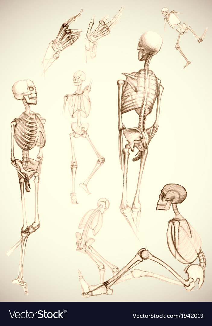 Sketch of skeletons - vector | Price: 1 Credit (USD $1)