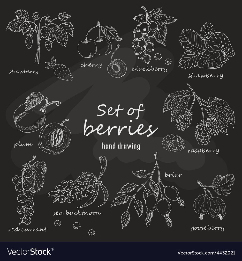 Set of garden berries on dark background vector | Price: 1 Credit (USD $1)