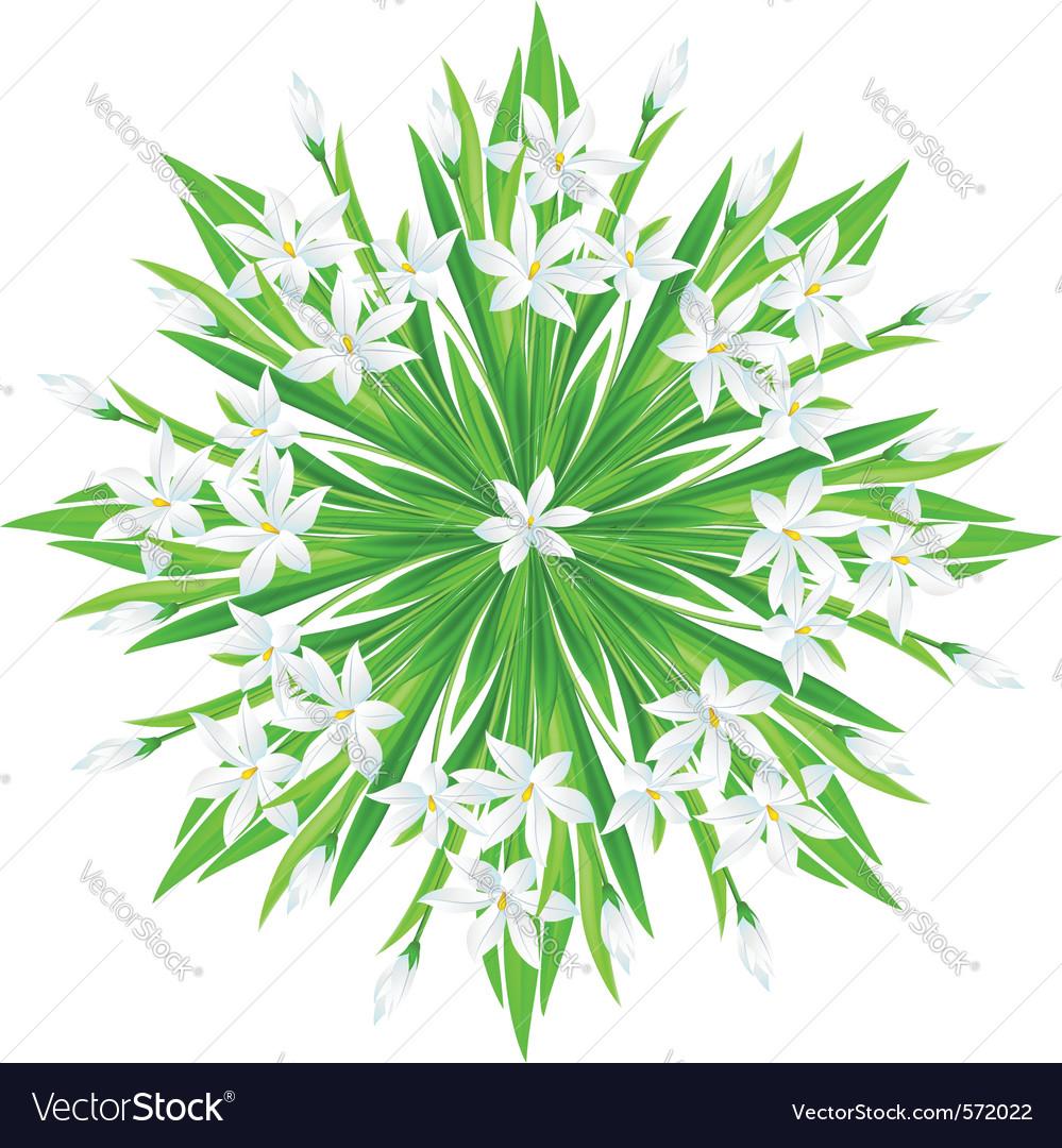 Spring flower star vector | Price: 1 Credit (USD $1)