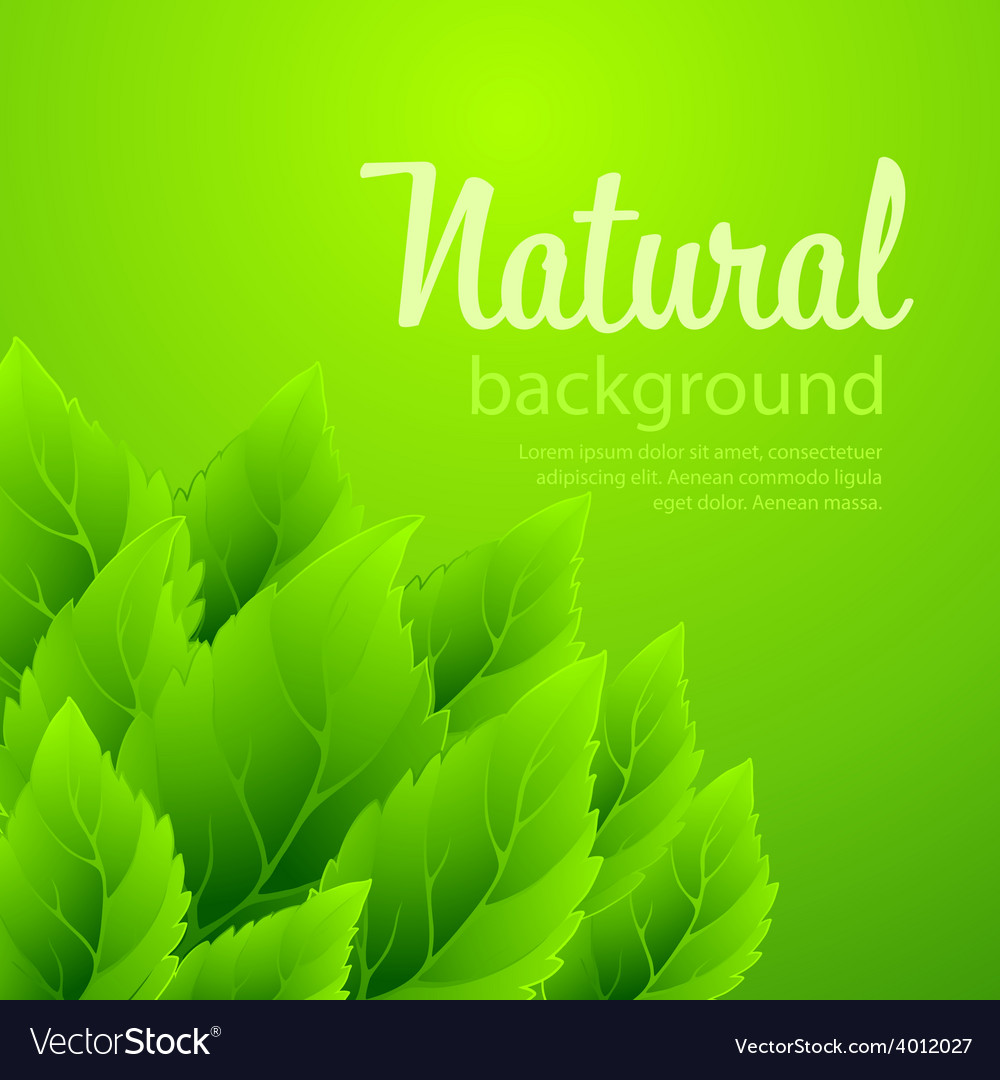Natural background with green spring leaves vector   Price: 1 Credit (USD $1)