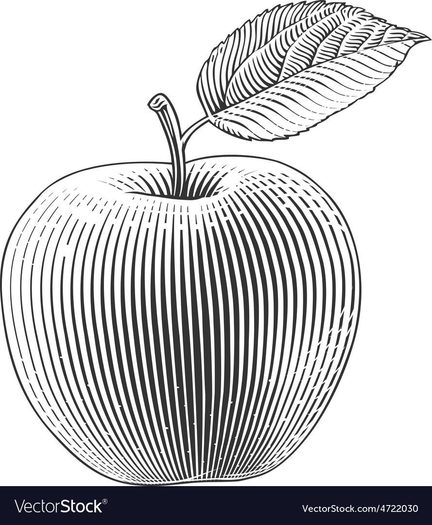 Apple in engraving style vector | Price: 1 Credit (USD $1)