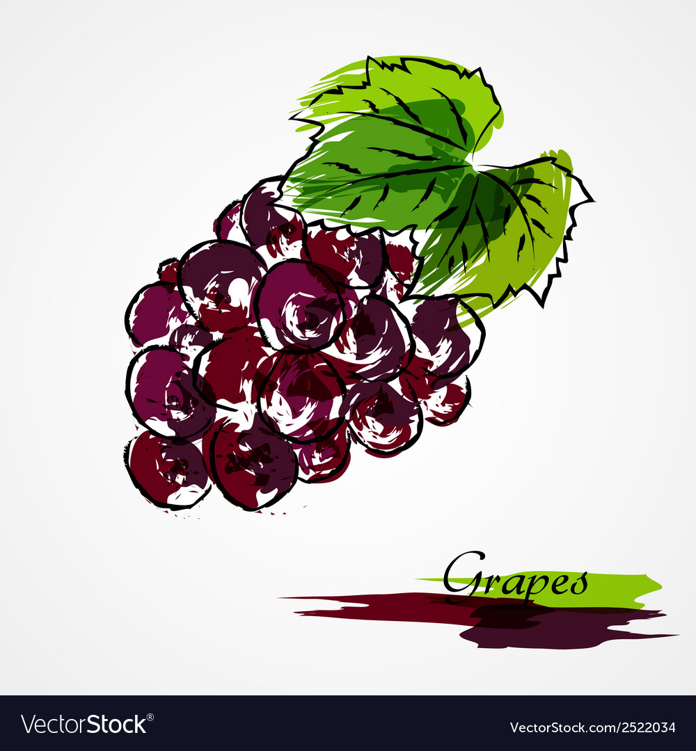 Grapes fruit vector | Price: 1 Credit (USD $1)