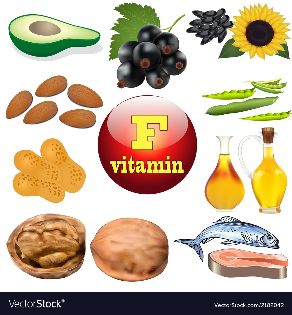 Vitamin f content plant vector | Price: 1 Credit (USD $1)