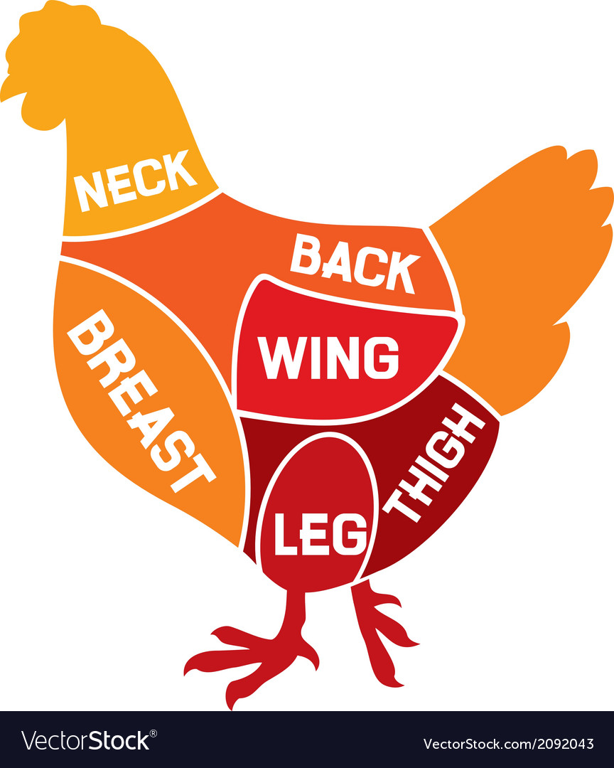 Chicken cuts diagram vector | Price: 1 Credit (USD $1)