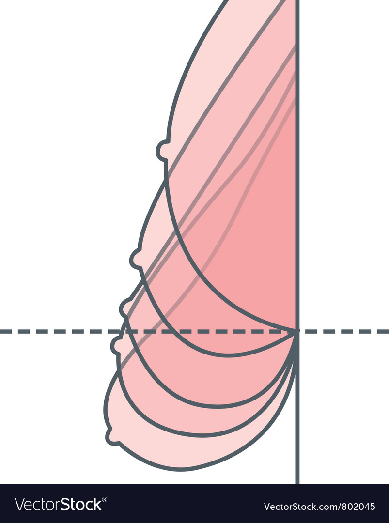 Breast lift vector | Price: 1 Credit (USD $1)