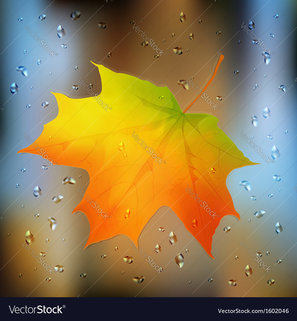 Autumn orange leaf on wet glass vector | Price: 1 Credit (USD $1)