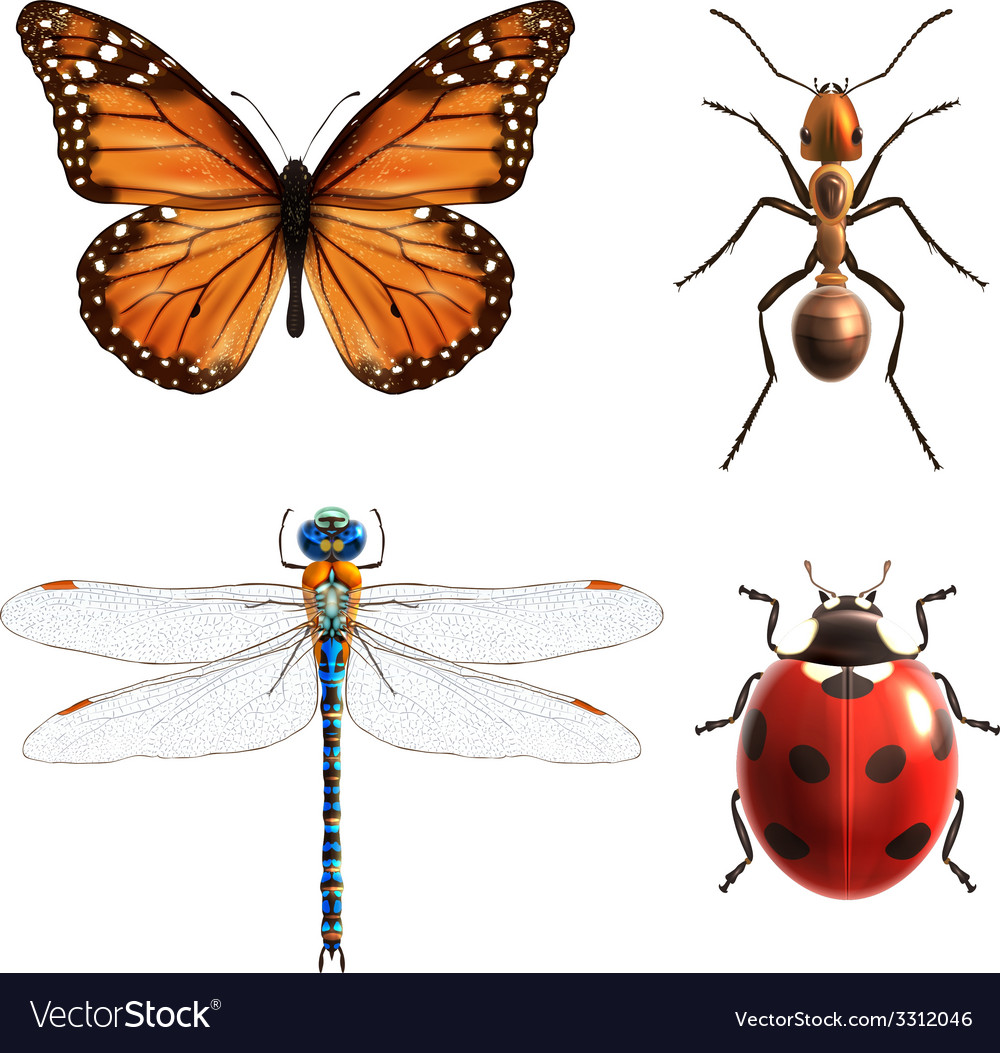 Insects realistic set vector | Price: 1 Credit (USD $1)