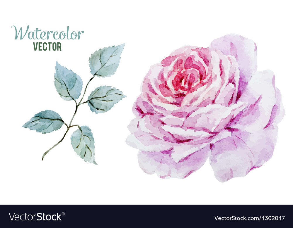 Gentle roses vector | Price: 1 Credit (USD $1)