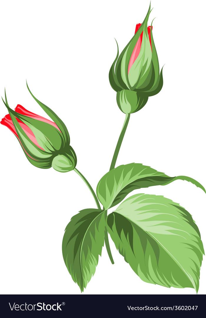 Hand drawn rose vector   Price: 1 Credit (USD $1)