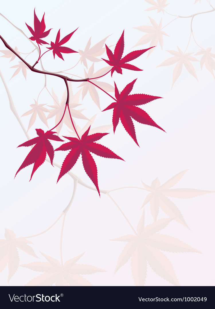 Japanese maple vector | Price: 1 Credit (USD $1)