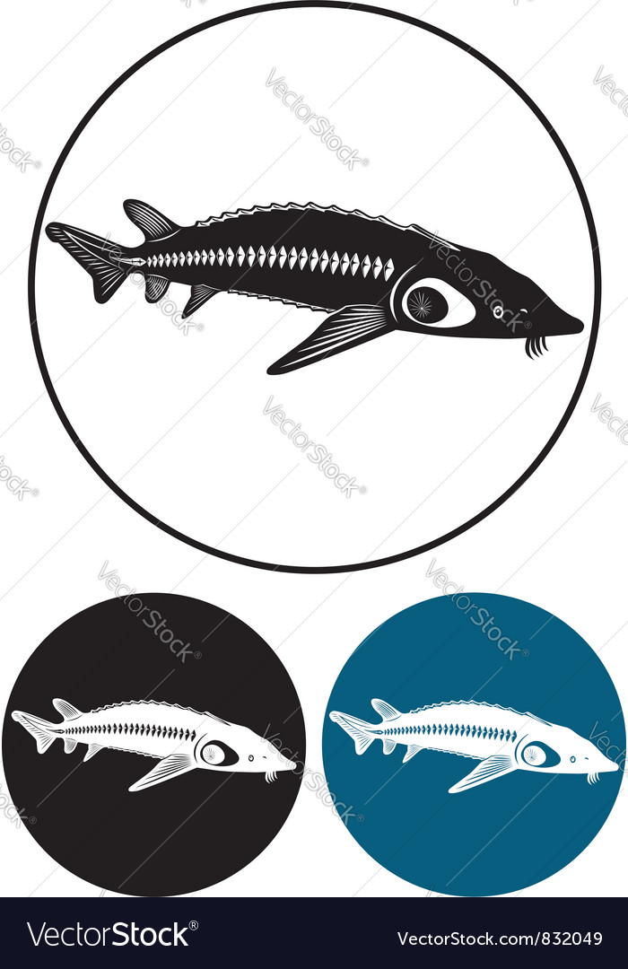 Sturgeon vector | Price: 1 Credit (USD $1)