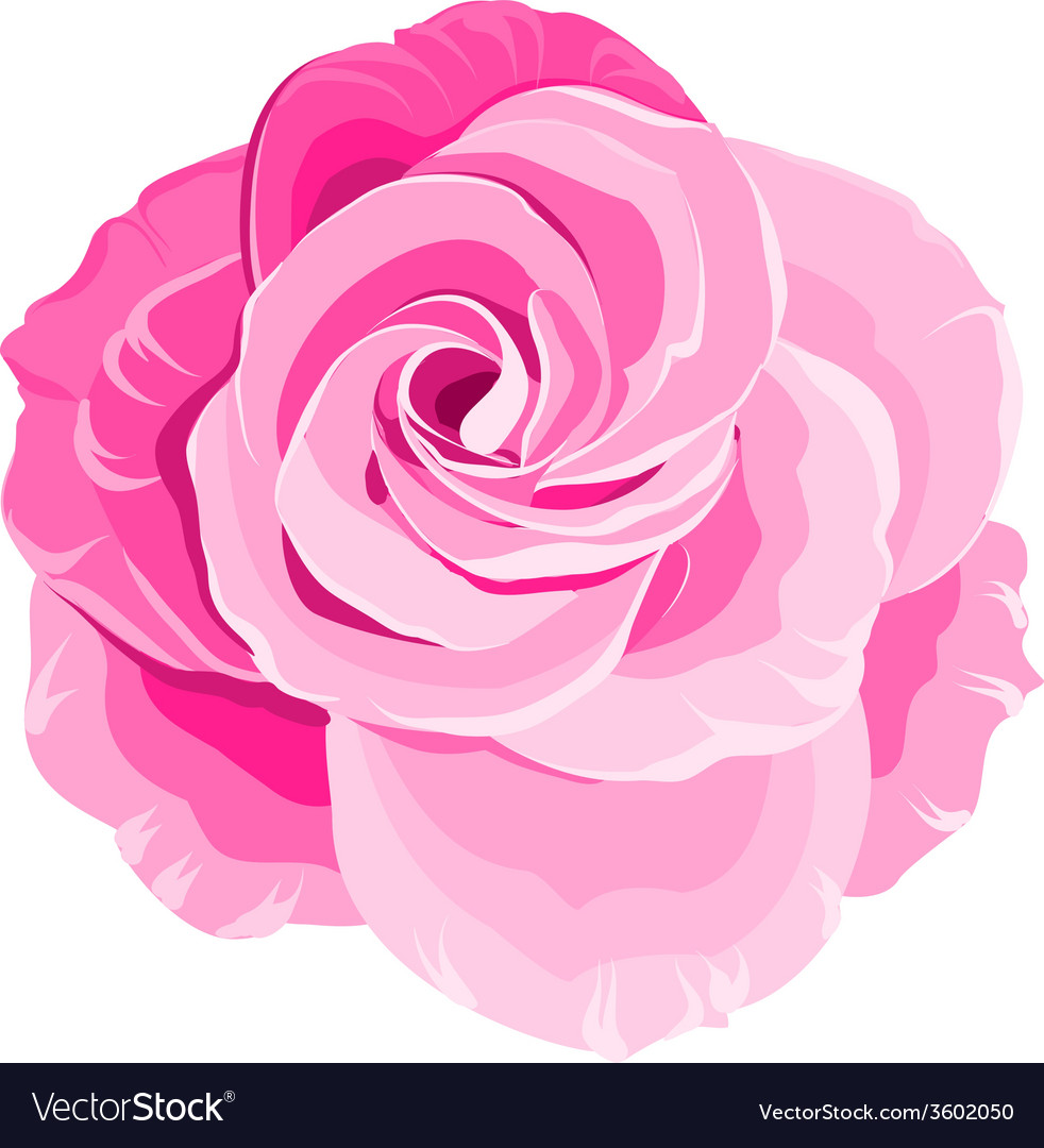 Red rose vector   Price: 1 Credit (USD $1)