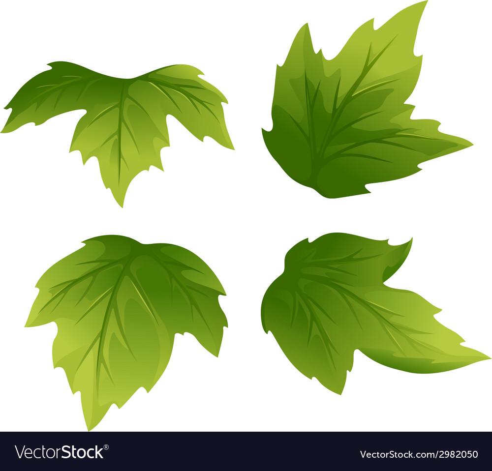 Set of green leaves vector | Price: 1 Credit (USD $1)