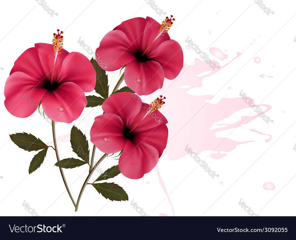 Three pink flowers background vector | Price: 1 Credit (USD $1)