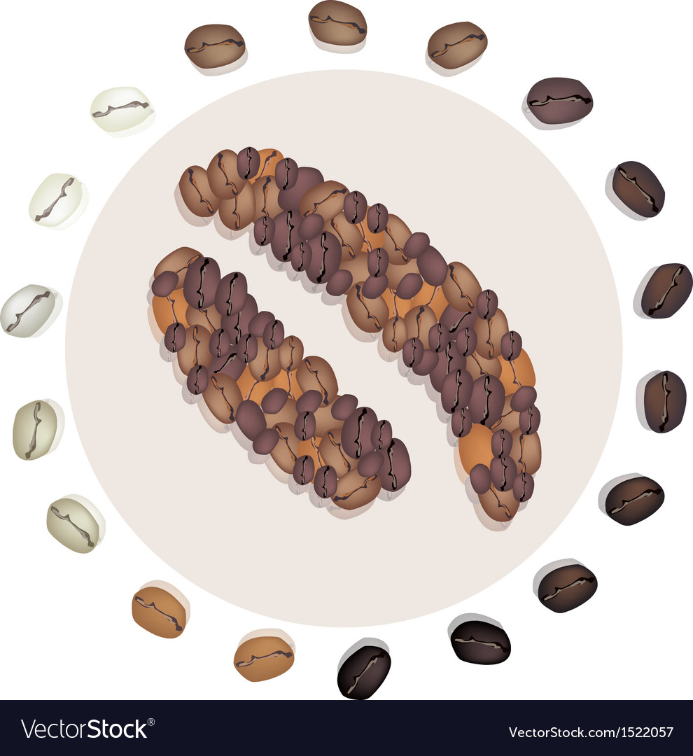 Different roasted coffee bean with civet coffee be vector | Price: 1 Credit (USD $1)