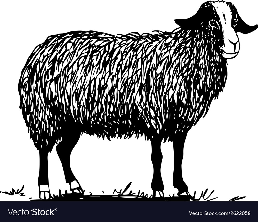 Farm sheep vector | Price: 1 Credit (USD $1)