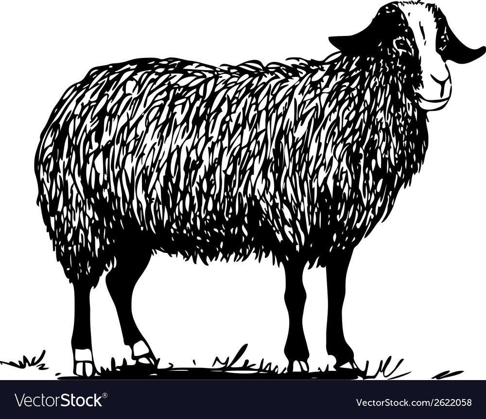 Farm sheep vector   Price: 1 Credit (USD $1)