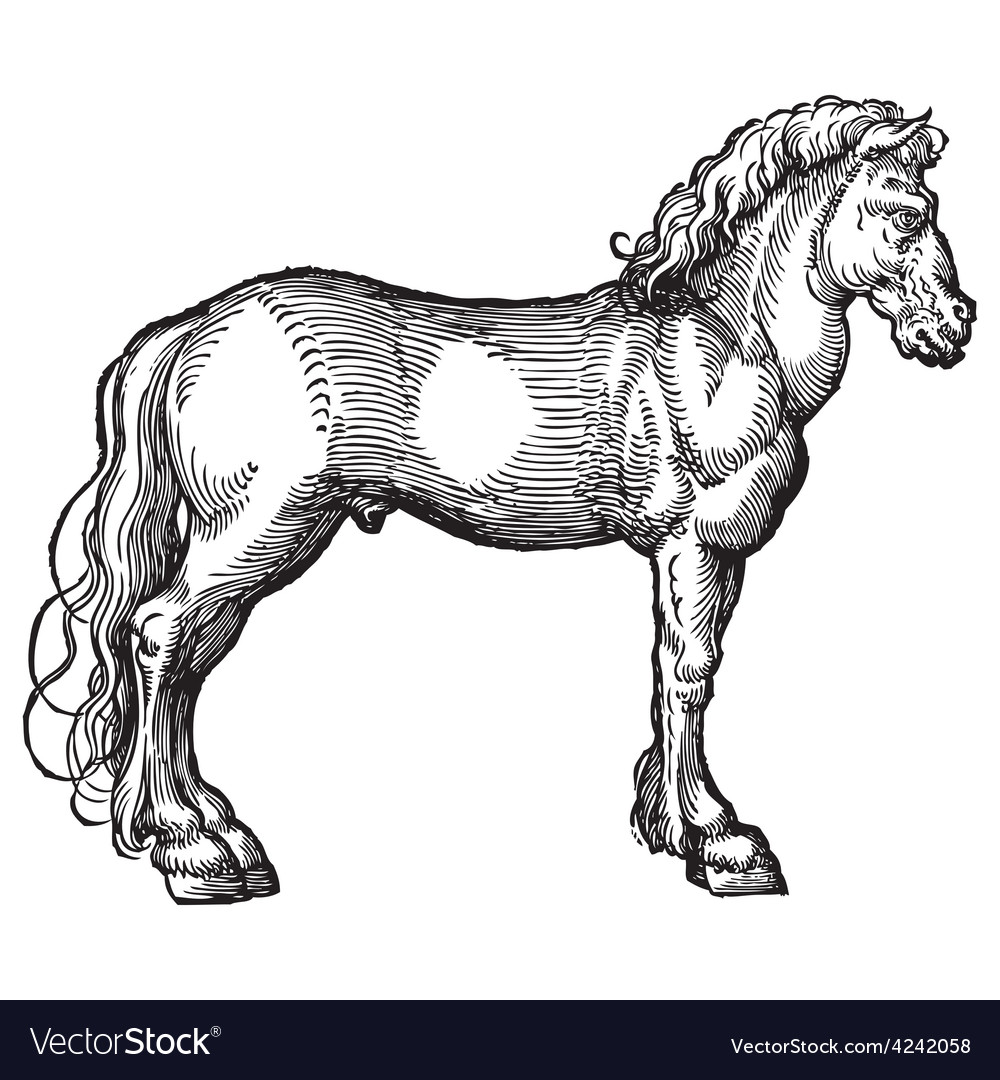 Horse engraving vector | Price: 3 Credit (USD $3)