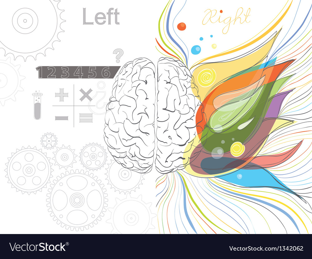 The left and the right brain functions vector | Price: 1 Credit (USD $1)