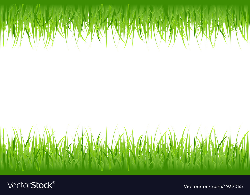 Grass on white background vector | Price: 1 Credit (USD $1)