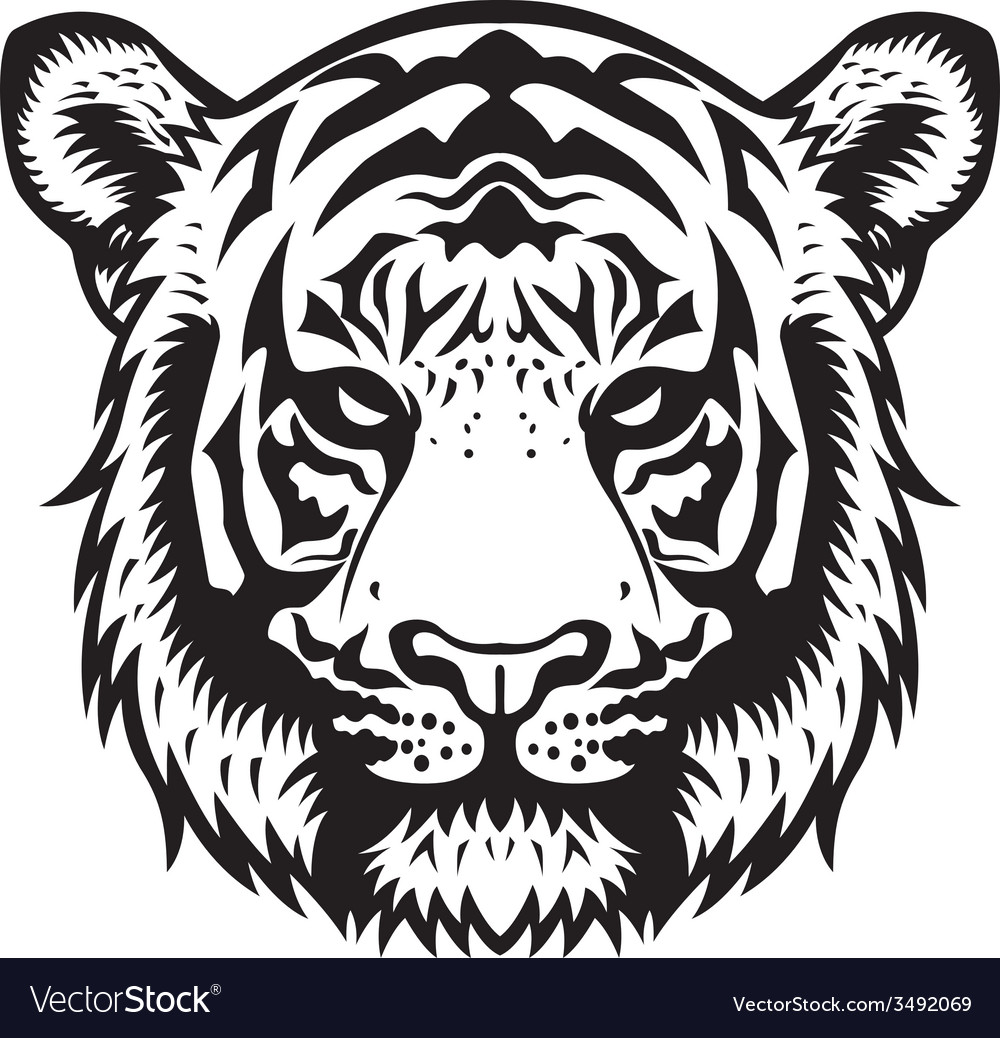 Tiger head bw vector | Price: 1 Credit (USD $1)