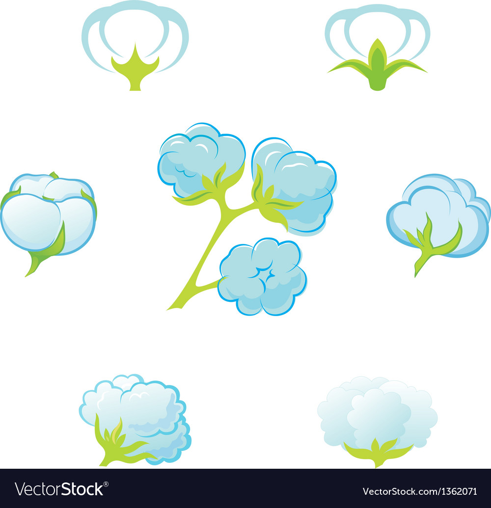 Cotton gossypium vector | Price: 1 Credit (USD $1)