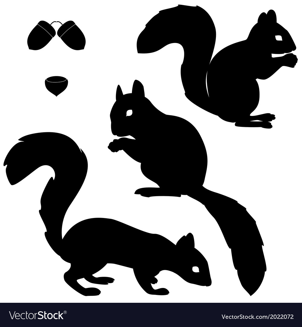 Set of squirrels silhouettes vector