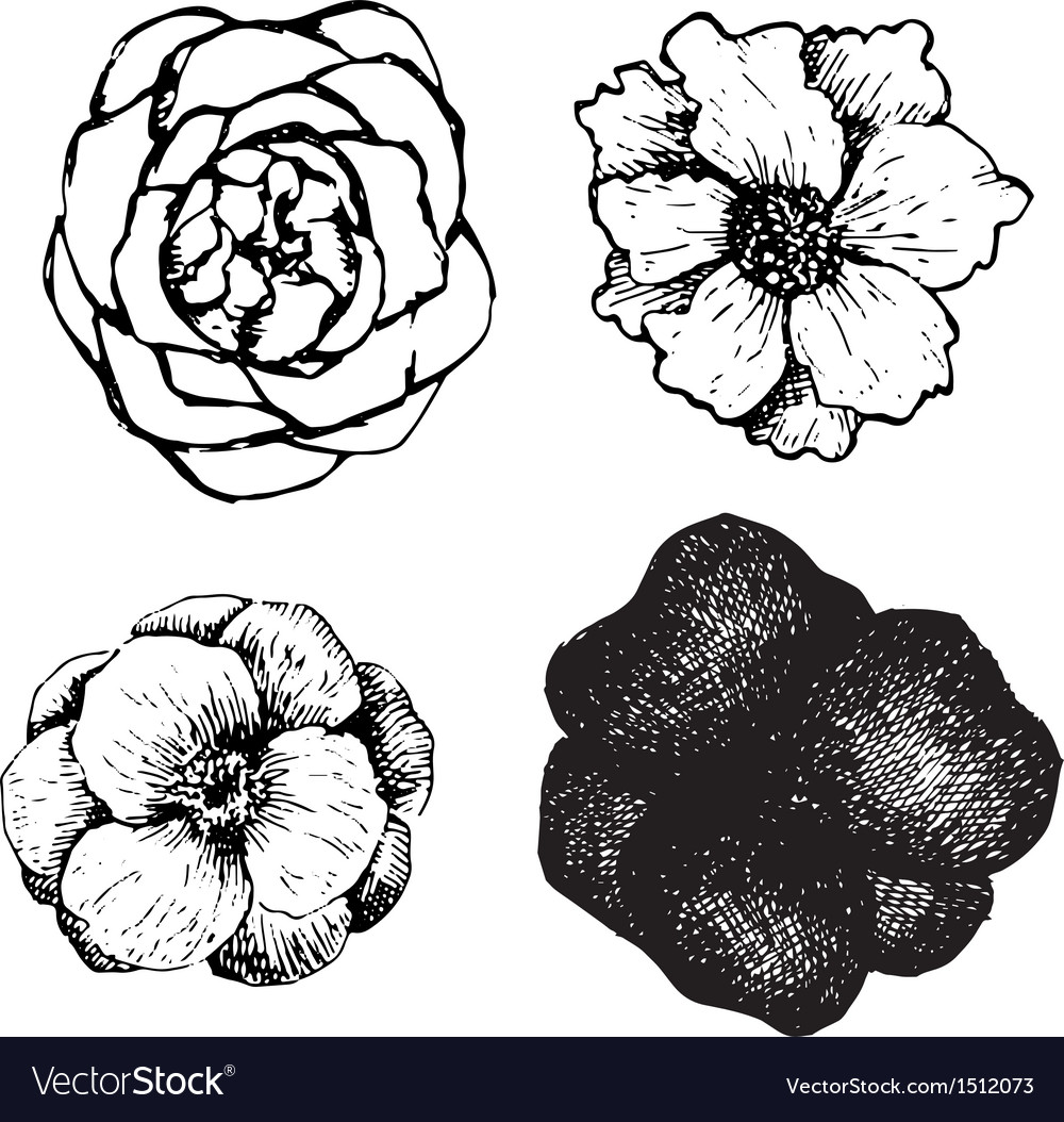 Set of ink pen hand drawn flowers vector | Price: 1 Credit (USD $1)