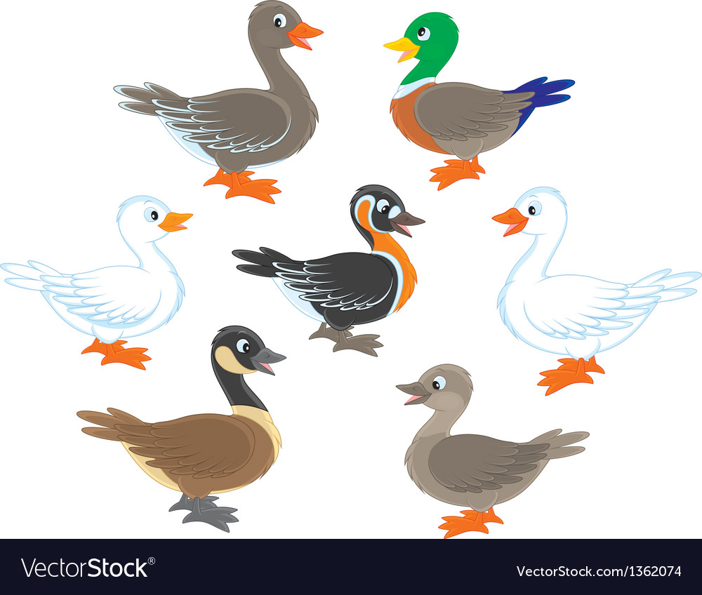 Ducks and geese vector | Price: 3 Credit (USD $3)
