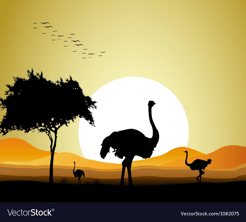 Ostrich silhouette vector | Price: 1 Credit (USD $1)