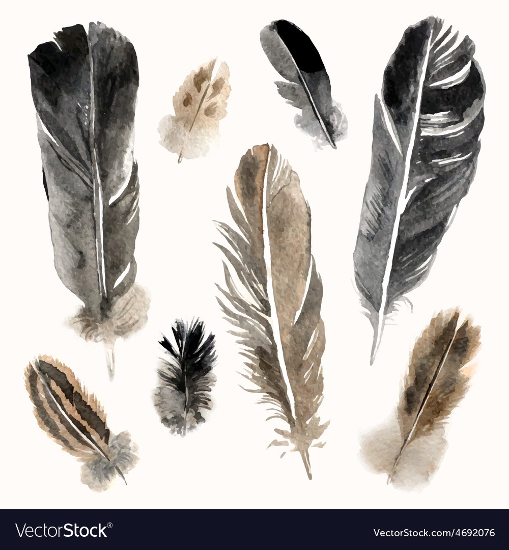 Watercolor feathers set on white background vector | Price: 1 Credit (USD $1)